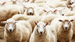 The Early Church knew that there was but one Chief Shepherd, and He wasn't in Rome.
