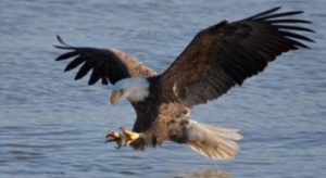 """And to the woman were given two wings of a great eagle, that she might fly into the wilderness..."" (Revelation 12:14)"