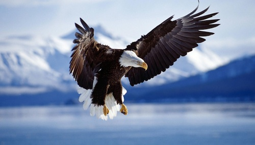 "5e2b683a072 ""And to the woman were given two wings of a great eagle"